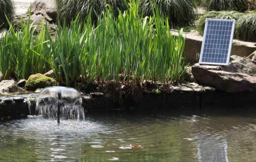 Solar pond fountains for outdoor - Sunny Bunny Solar